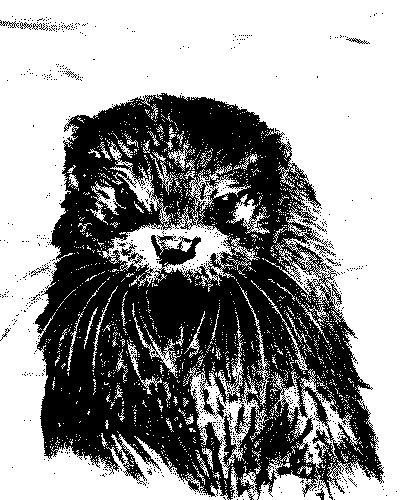 otter-sw